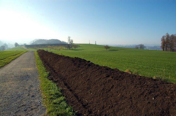 Vermiculture Bulk